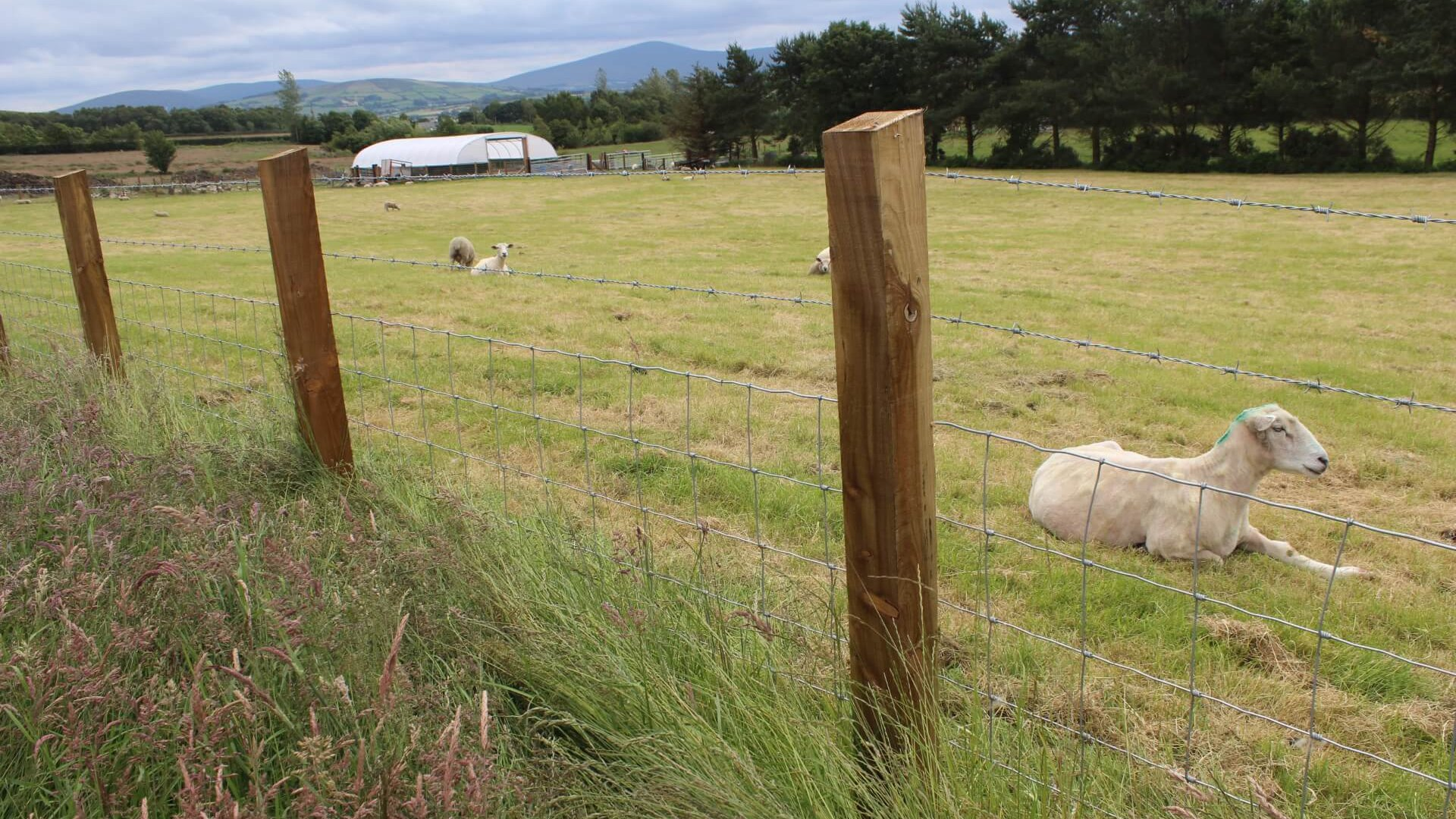 Solar Farm Sheep Fence